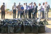 Incinération de 500 kg de cocaïne à Doudah : Sous les feux des projecteurs
